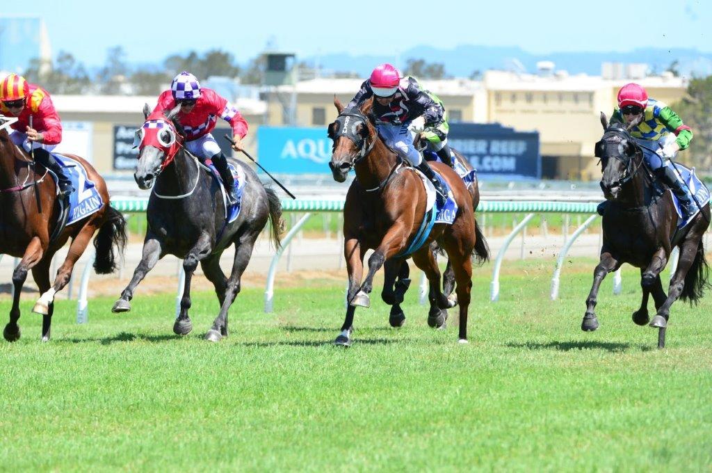 Race Horse Sydney