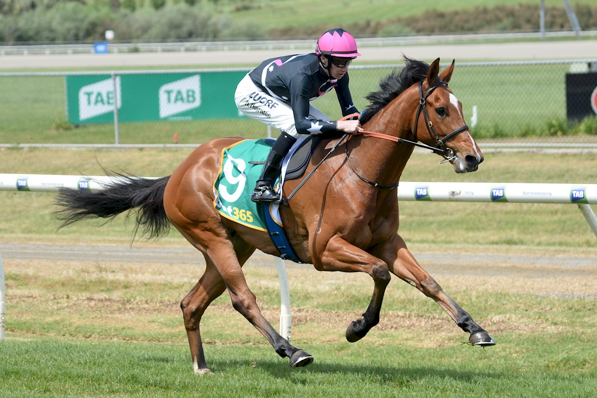 Open Minded (NZ) ridden by Damien Thornton
